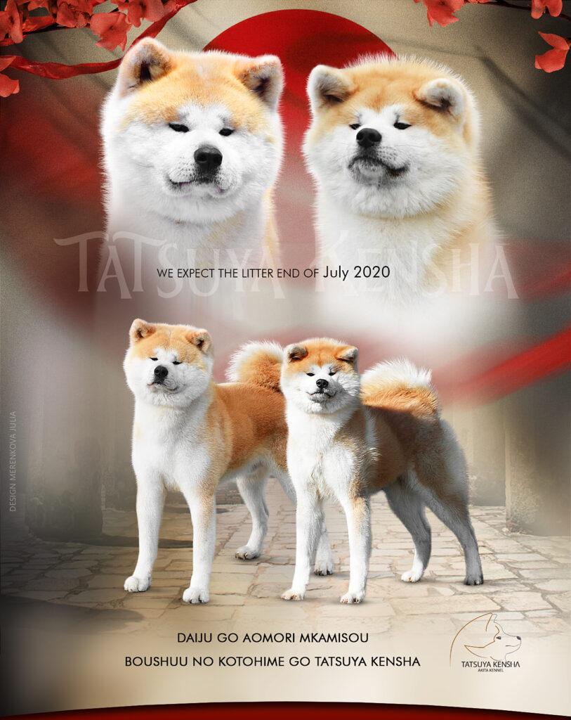 Daiyuu Go X Maya